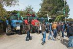 Protesta contro i cinghiali nelle campagne, trattori in strada a Vibo Valentia - Foto