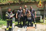 Cinque cagnolini cadono in una scarpata a San Costantino Calabro: salvati