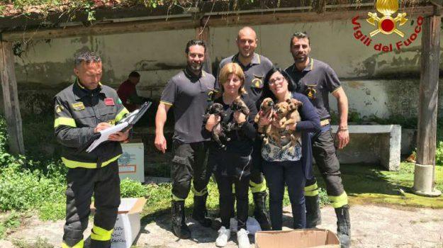 animali, cani, san costantino calabro, Catanzaro, Calabria, Cronaca