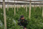 Gela, sequestrata piantagione con 10mila piante di cannabis: vale milioni di euro - Foto