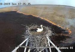 Sta bruciando tutto, ma la cicogna non abbandona i suoi piccoli Il video da una telecamera di sorveglianza arriva dalla Russia - CorriereTV