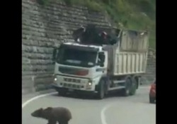 Trentino, 5 orsi attraversano la strada La scena ripresa San Lorenzo Dorsino, in provincia di Trento - Corriere Tv