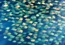 Un mare di plastica? No, ecco cosa si sta muovendo in acqua in Australia Le immagini girate da un drone al largo di Bondi Beach - CorriereTV