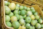 Non solo bergamotto, vetrina mondiale per le eccellenze agroalimentari reggine