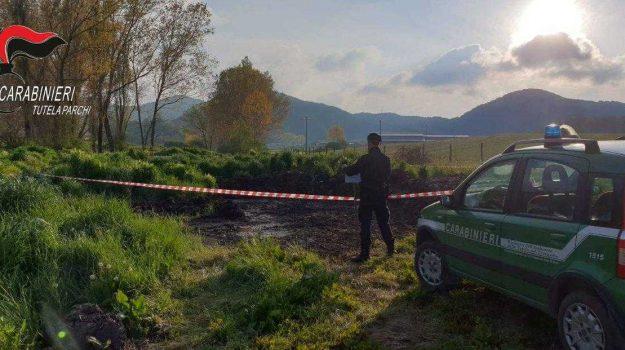 abbandono di rifiuti, morano calabro, parco del pollino, rifiuti agronomici, Cosenza, Calabria, Cronaca
