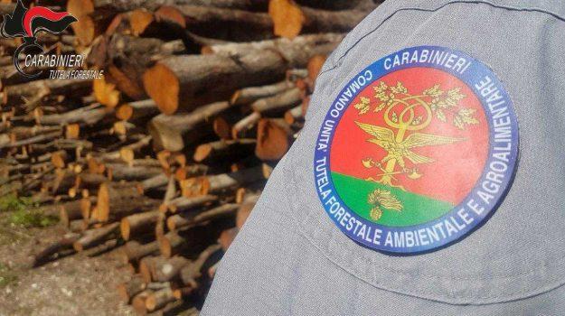 """6 denunce, cooperativa, località """"Cerasello"""", pietrapaola, sospensione dell'autorizzazione, utilizzazioni boschive, Cosenza, Calabria, Cronaca"""