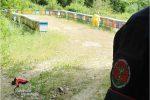 Nomadismo delle api, controlli a Vibo: denunce e sanzioni per oltre 2 mila euro