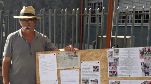 francica, furto cavalli, minacce imprenditore, Suriano, Filippo Suriano, Catanzaro, Calabria, Cronaca