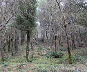 I sentieri fra i boschi del Friuli disponibili on line per i turisti