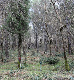 Piani di gestione forestale, tredici comuni dei Nebrodi fanno rete