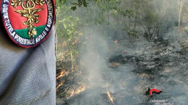 carabinieri forestali, controlli di prevenzione, danni all'ambiente, illeciti amministrativi, incendi boschivi, Catanzaro, Calabria, Cronaca