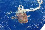 Caretta caretta salvata in mare a Filicudi: la tartaruga Crow era impigliata in una lenza