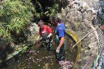 Vasca ripulita, pavimentazione sistemata: le foto dei lavori a villa Mazzini a Messina