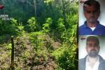 Marijuana, a Cassibadi di Limbadi la più grande piantagione scoperta quest'anno: droga per 8 milioni - Nomi e foto