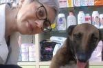 Cane randagio ferito entra in farmacia e chiede aiuto: la commovente storia dalla Turchia