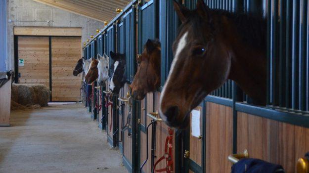 cavalli rubati, fracica, Catanzaro, Calabria, Cronaca