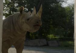 Dall'Europa al Ruanda: la storia dei cinque rinoceronti che tornano in libertà Nati e cresciuti negli zoo europei, vengono reinseriti in natura nell'Akagera National Park. - Chanupa