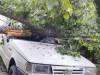 Albero precipita su un'auto a Fiumedinisi, ferito il conducente
