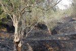 Muore bruciato per salvare la sua casa da un incendio: tragedia a Settingiano