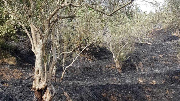 incendio, Muore bruciato, settingiano, vigili del fuoco, Serafino Cardamone, Catanzaro, Calabria, Cronaca