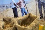 Sicilia, dalla Regione in arrivo altri 30 milioni per gli agricoltori