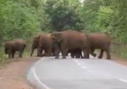 Il corteo funebre degli elefanti per il cucciolo morto Una scena straziante, documentata in India. Il video conferma la pratica del lutto tra gli elefanti - CorriereTV