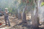 La pineta di Nicotera Marina sotto attacco dei piromani, incendi domati dai volontari
