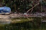 Messina, emergenza inquinamento a Ganzirri: scarichi nelle acque del Lago grande - Foto