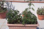 Coltivava 60 piante di marijuana in casa, arrestato a Gioiosa Ionica