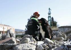 Massimo e Kreole, che insieme salvano le vittime dei crolli Ecco due dei protagonisti della puntata di Master of Photography dedicata agli animali che lavorano con l'uomo - CorriereTV