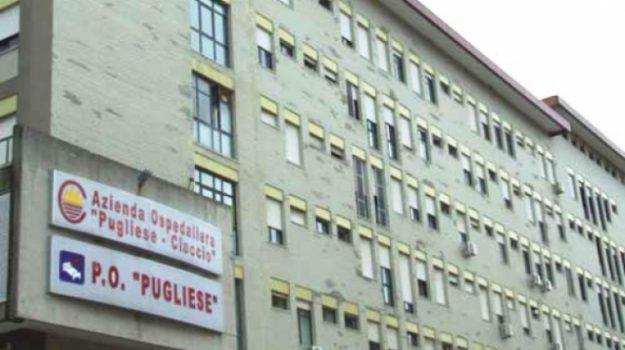 ospedale catanzaro, precari Pugliese, Catanzaro, Calabria, Cronaca