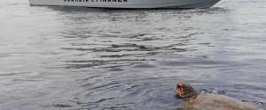 Tartaruga in difficoltà salvata dai finanzieri al largo di Gioia Tauro