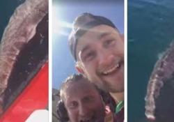 «Buona fortuna col nuoto, bastardo». I due pescatori ridono e si inquadrano con la telecamera, con orgoglio, mentre rigettano in mare lo squalo sanguinante. Gli hanno appena mozzato la coda con un coltello. L'animale tenta comunque di nuotare ed andarsene. Ma il suo destino è segnato: morirà d...