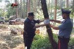 Lamezia, distrutto un faggeto di 2,5 ettari: denunciato il proprietario del bosco