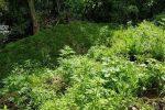 Coltivavano 600 piante di canapa sull'Aspromonte, due arresti a Bianco