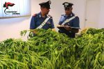 Una piantagione di marijuana scoperta a San Martino di Finita, due arresti