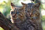 Messina, tentativo di avvelenare una colonia di gatti in via Regina Elena