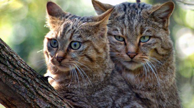 colonie di gatti, comune di tropea, Lega antivivisezione, sensibilizzazione, tutela dei gatti, giovanni macrì, Catanzaro, Calabria, Società