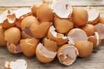 Ossa, grazie ai gusci d'uova si potrà migliorare la rigenerazione veloce