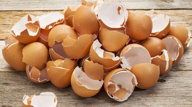 crescita delle ossa, gusci d'uovo, idrogel, invecchiamento, telaio in miniatura, Gulden Camci-Unal, Salute e Benessere
