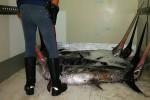 Barcellona, sequestrati 950 chili di pesce in cattivo stato: sanzioni da oltre 3 mila euro