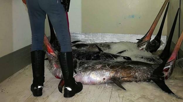 Asp di Messina, barcellona pozzo di gotto, pesce avariato, pesce in cattivo stato di conservazione, polizia stradale, sanzioni amministrative, Messina, Sicilia, Cronaca
