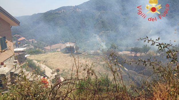 incendio uliveto Taverna, Catanzaro, Calabria, Cronaca
