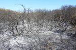 Cirò Marina, a fuoco la pineta comunale di Punta Alice: distrutti due ettari di terreno