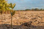 Agricoltura, dal Psr Calabria altri 8 milioni per oltre mille beneficiari