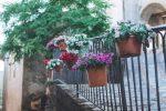 """""""Quartieri in fiore"""", a Mormanno il progetto che veste il borgo di bellezza - Foto"""