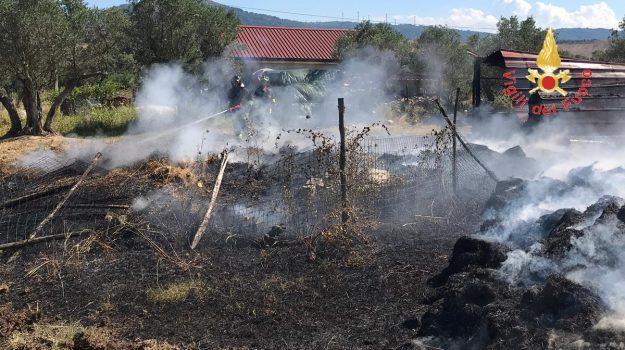 incendio stalla squillace, Mandrella, Catanzaro, Calabria, Cronaca