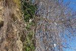 A Pizzo l'albero... dei pannoloni: gettati, sono rimasti appesi all'arbusto