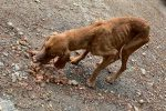 Cane abbandonato in balcone e morto, denunciati i proprietari per maltrattamenti