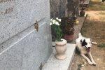 """Acquaro, continua l'avvelenamento seriale dei cani randagi: morta anche """"Lucifera"""""""